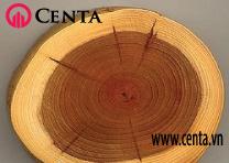 02-Mat-cat-go  Cach-phan-biet-cac-loai-go  www.centa.vn